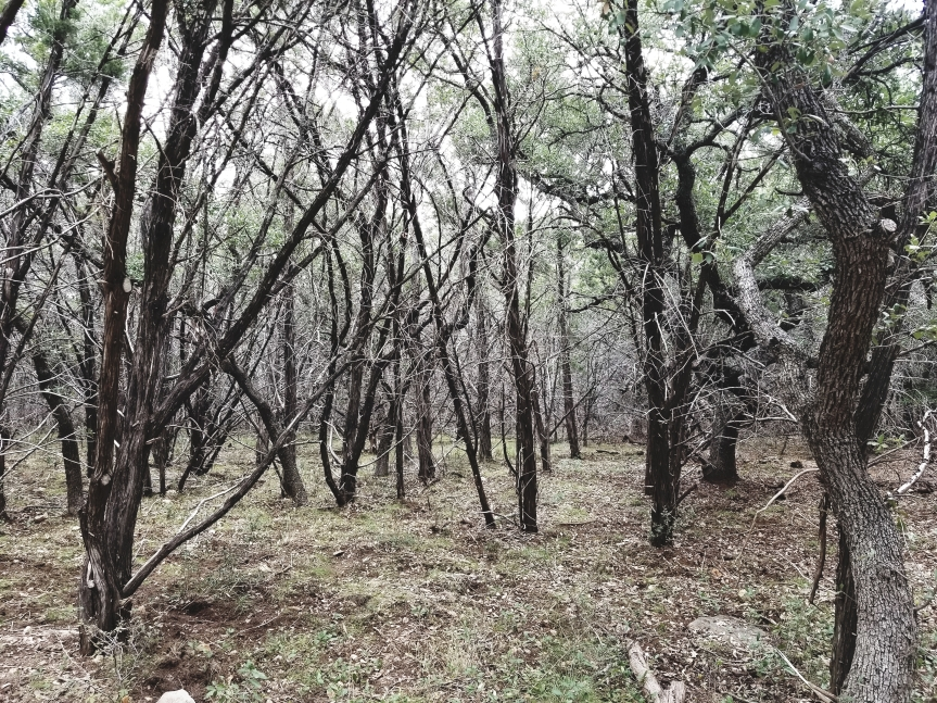 An eerie mist had settled among the forest at Pedernales Falls State Park.