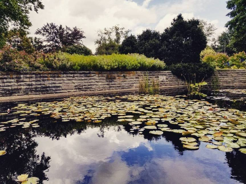 A lily pond at the Holden Arboretum
