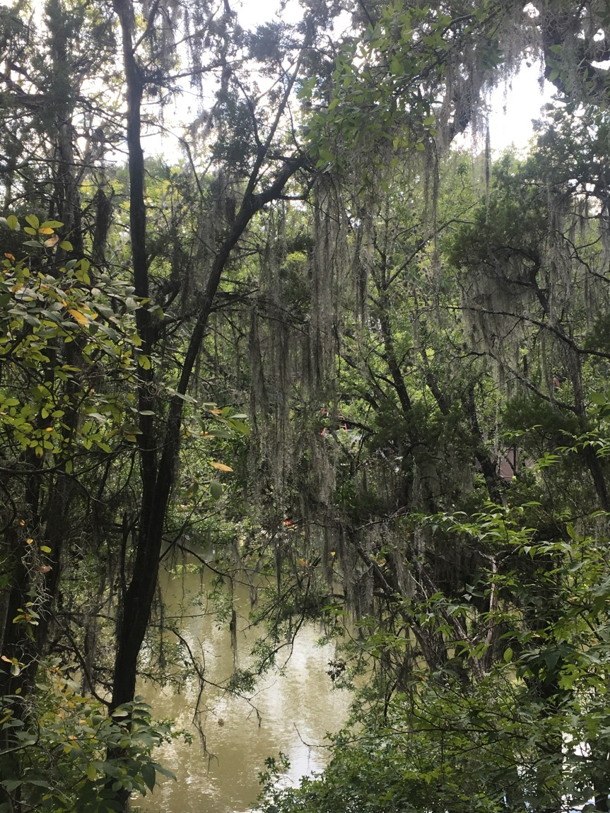 Spanish Moss and creek at Mayfield Park and Preserve in Austin, Texas