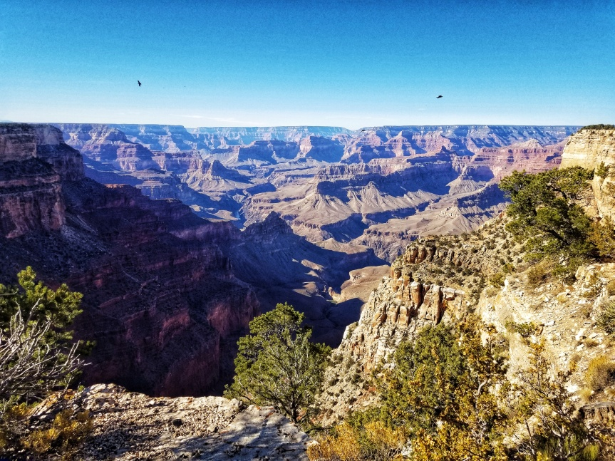 Ravens soaring over The Abyss, Grand Canyon National Park, South Rim