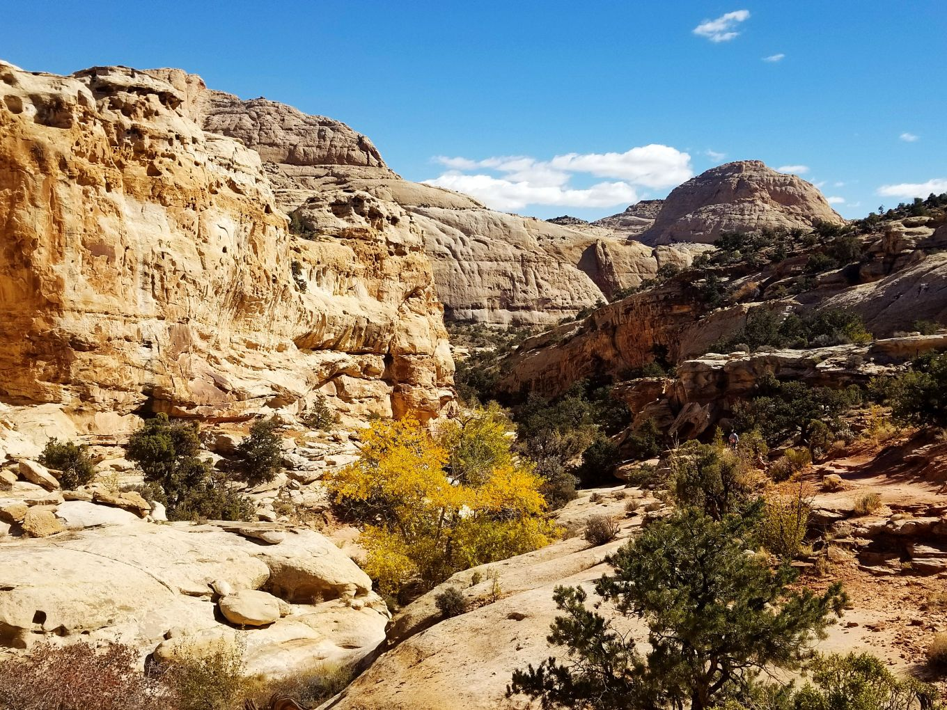 The dry creek bed of Capitol Reef's Hickman Bridge Trail