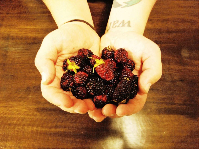 Berries Hands