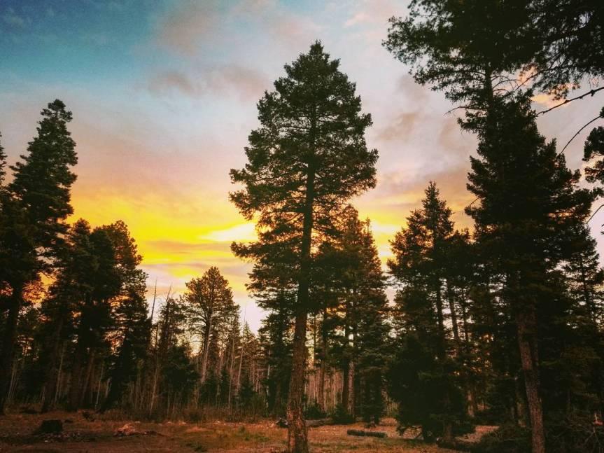 Sunrise at Kaibab  National Forest, AZ