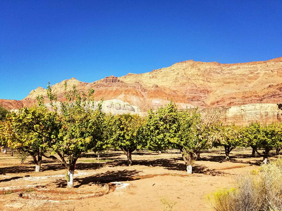 The orchard at Lonely Dell Ranch