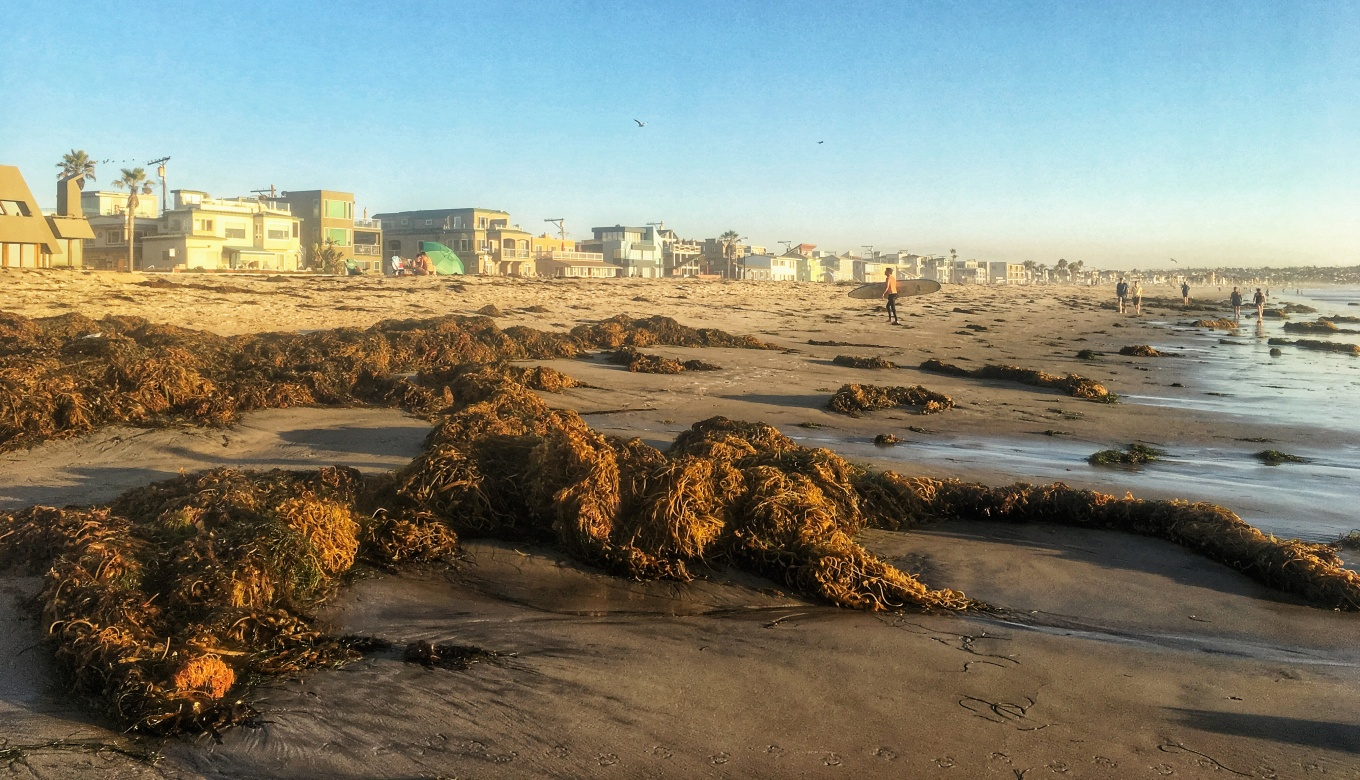 Kelp Clumps, Pacific Beach, San Diego, CA