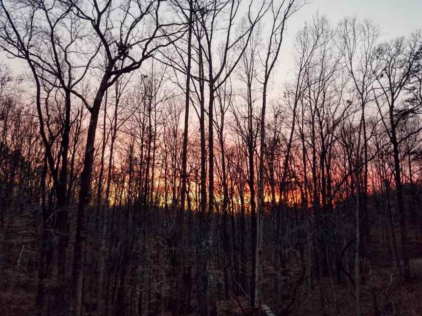 A view of the sunset in the woods of South Carolina