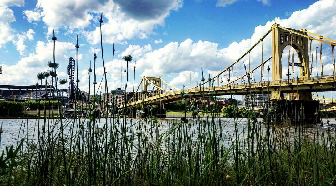 Roberto Clemente Bridge and the Allegheny River, Pittsburgh
