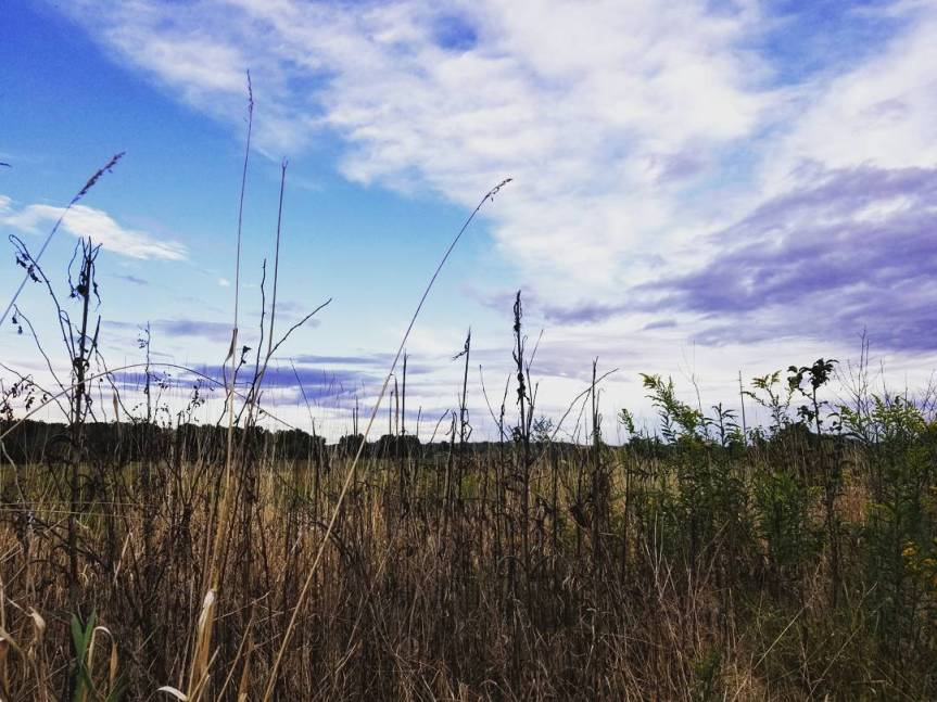 Mill Creek Preserve, OH