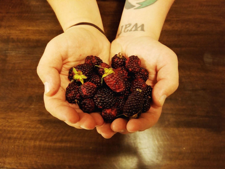 Mora, Andean Blackberries, Cuenca, Ecuador