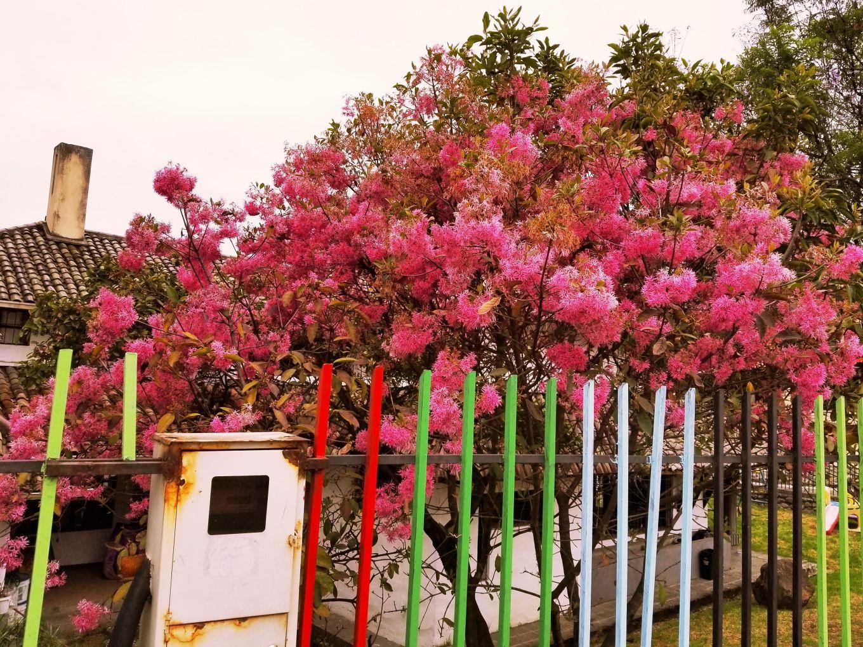 Flowers In Yard In El Batán Cuenca, Ecuador