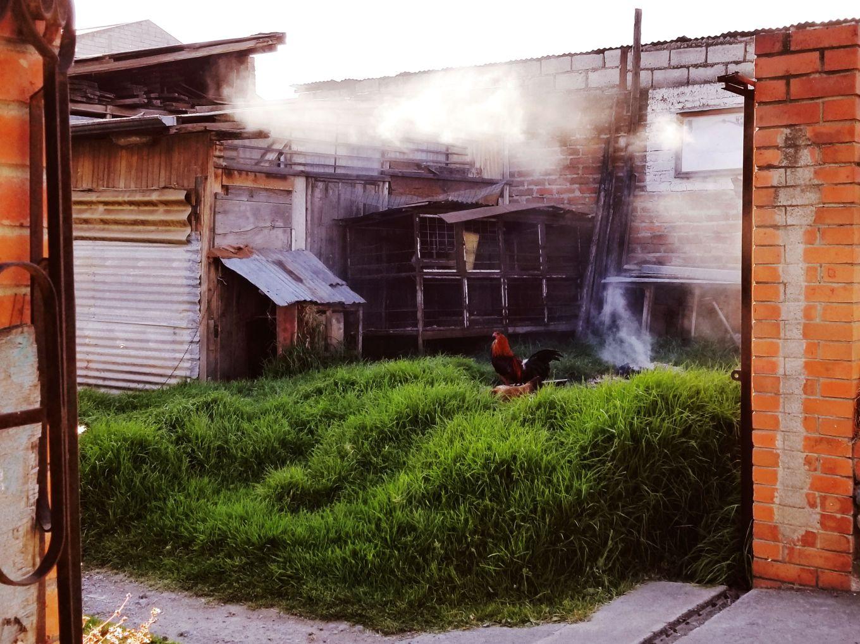 Rooster In Smoky Yard In El Batán Cuenca, Ecuador