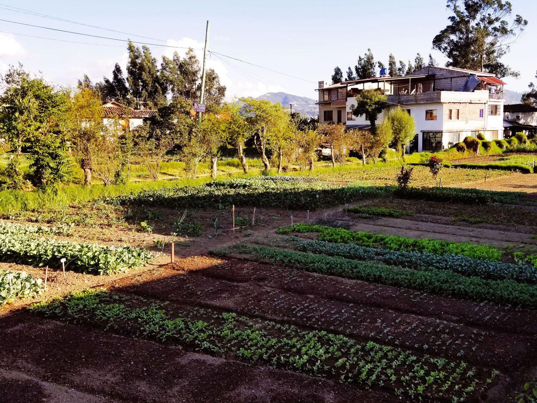 Garden In El Batán Cuenca, Ecuador
