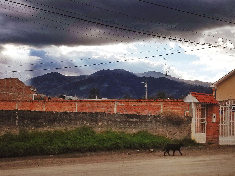 Dog And The Andes Mountains Cuenca, Ecuador