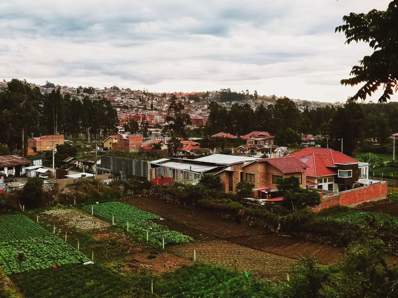 Hacienda Farms in Cuenca