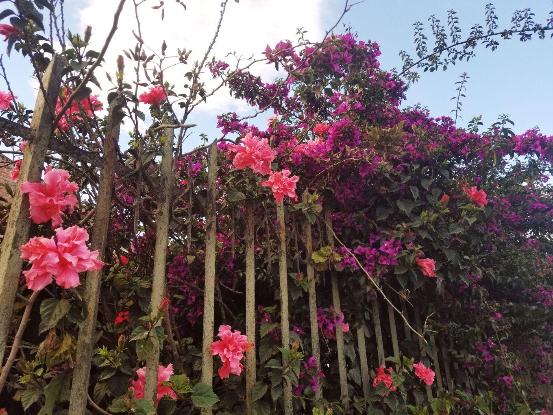 Flowers Pushing Through Gate, Cuenca, Ecuador